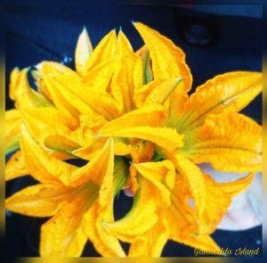 Mazzo di fiori di zucca